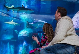 Shark Week at Sea Life London Aquarium, an official K-Rated attraction KidRated reviews