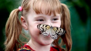 Sensational Butterflies at the Natural History Museum, an official K-Rated attraction © The Trustees of the Natural History Museum, London