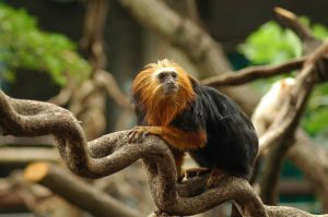 London Zoo KidRated review Tamarin