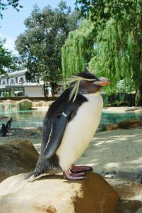 London Zoo KidRated review penguin