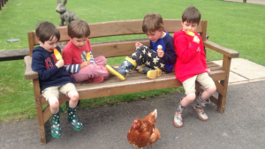 Chickens at Stockley Farm