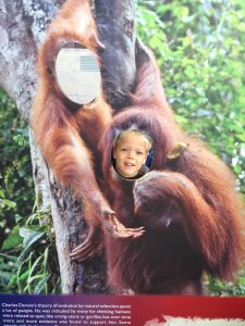 London Zoo KidRated review Gorilla Kingdom