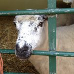 London Hackney City Farm KidRated reviews and family offers