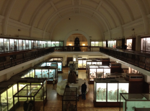 London Horniman Museum and Gardens KidRated Reviews family days out kids