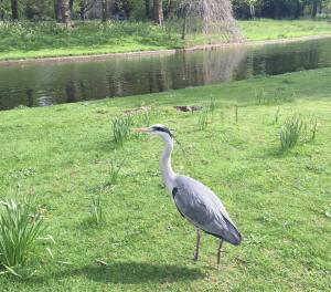 Regent's Park Heron