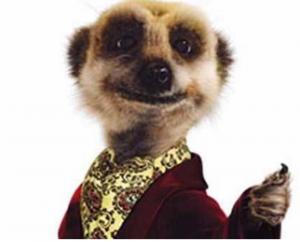 meerkat movies