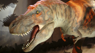 a moving T-Rex dinosaur at the natural history museum london