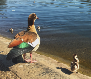 Ducks Serpentine Hyde Park KidRated Tim Lott Best Days Out