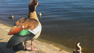 Ducks Serpentine Hyde Park KidRated Tim Lott Best Days Out