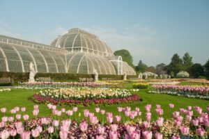 kew gardens palm house and tulips in spring an