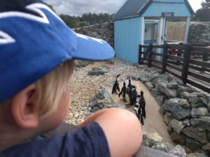 banham zoo penguins with boy anyway to stay kidrated