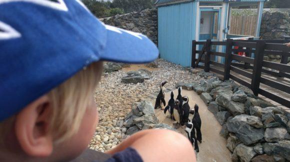 boy seeing penguins at banham zoo any way to stay kidrated norfolk uk