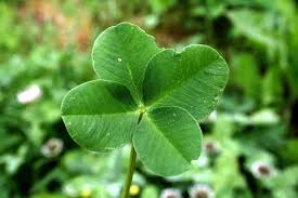 Four leafed clover St Patricks Day